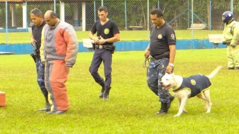 Salto conquista troféus no 7° Campeonato de Cães de Polícia das Guardas Municipais do Brasil